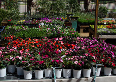 Schmitz Garden Center Spring 2016